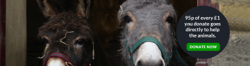Buy our ponies a gift