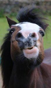 Meet the Ponies - Adoption Afternoon @ Hope Pastures | England | United Kingdom