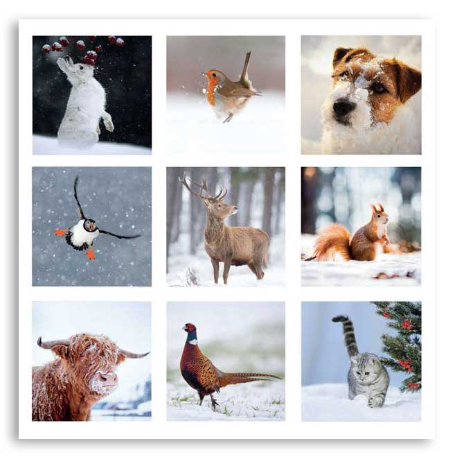 'Winter Collage' Christmas cards