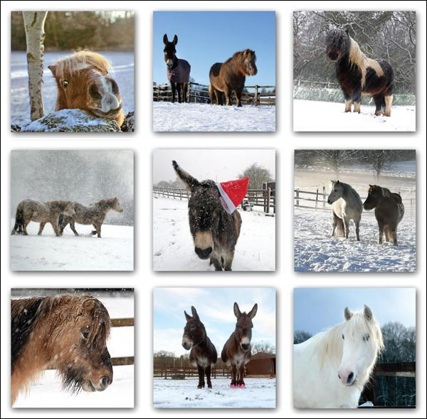 'Hope Pastures Collage' Christmas cards