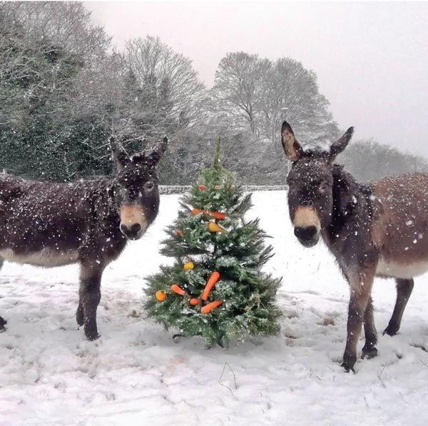 Nosey-and-Sandy-Christmas-Tree