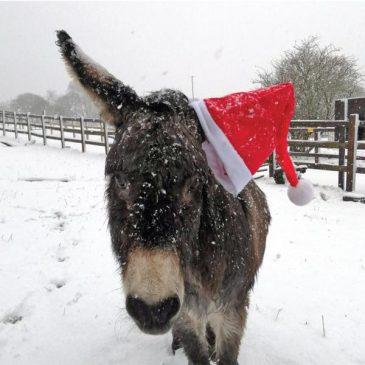 Sandy-Christmas-Hat