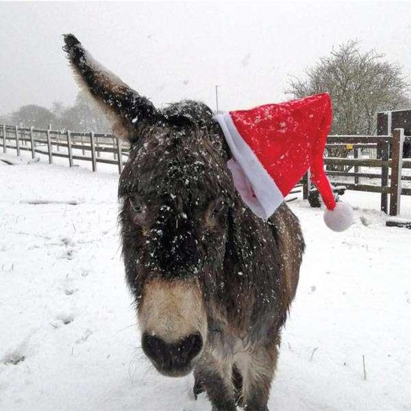 'Sandy Christmas Hat' Christmas cards