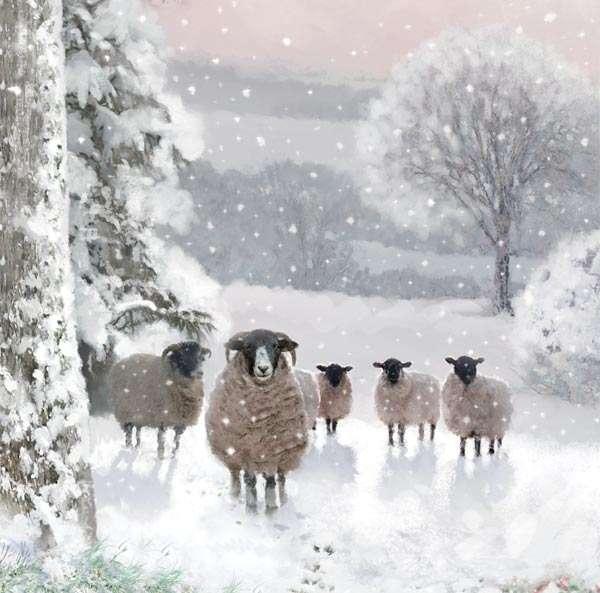 'Sheep' Christmas cards